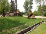 Kamelanlage (Tiergarten Falkenstein)