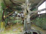 Innenanlage der Kapuzineraffen (Zoo Salzburg)