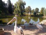 Teich (Pfauengarten)