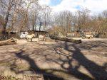Wildpferdanlage (Zoo Leipzig)