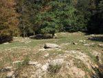 Wolfanlage (Wildpark Bad Mergentheim)