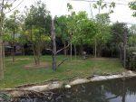Außenanlage der Okapis ( Diergaarde Blijdorp)