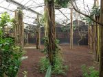 Innenanlage der Okapis ( Diergaarde Blijdorp)