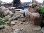 Pinguinanlage (Sea Life Scheveningen)