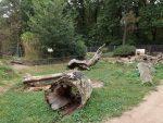 Stachelschweinanlage (Wildpark Reuschenberg)