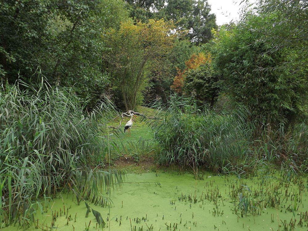 Storchenanlage (Wildpark Reuschenberg)