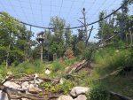 Weißkopfseeadler (Zoo Brno)