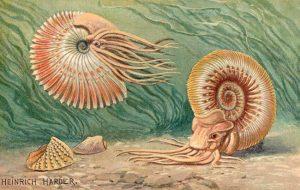 Ammoniten (Heinrich Harder)