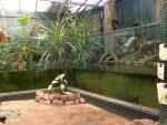 Paludarium mit Leguanen (Ouwehands Dierenpark)