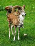 Arkal und Berberaffe (Zoopark Chomutov)
