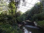 Begehbare Voliere (Ouwehands Dierenpark)
