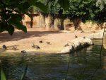 Flusspferdanlage (Erlebniszoo Hannover)