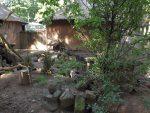 Anlage für Fuchsmangusten (Ouwehands Dierenpark)