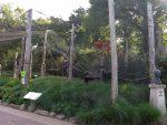 Kattavoliere (Ouwehands Dierenpark)