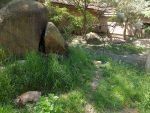Außenanlagen für Löffelhunde und Mangusten (Zoo Plzen)