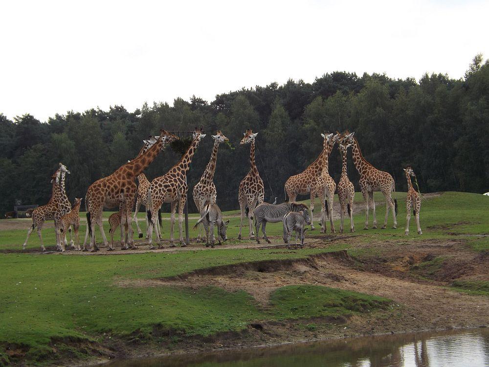 Afrikanlage (Safaripark Beekse Bergen)