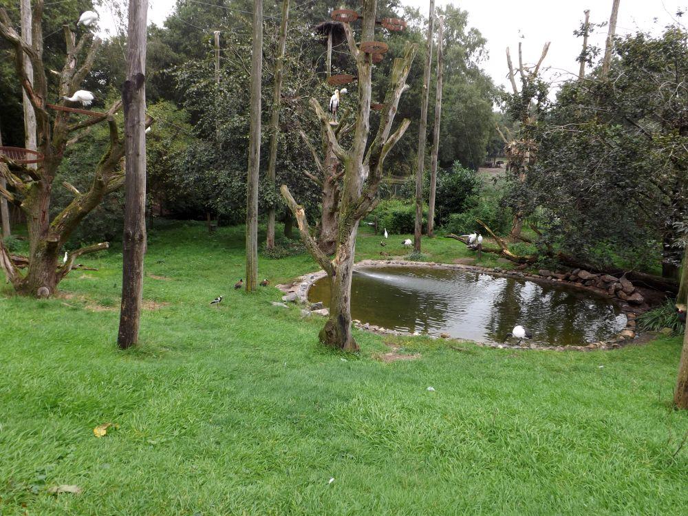 Voliere für afrikanische Vögel (Safaripark Beekse Bergen)