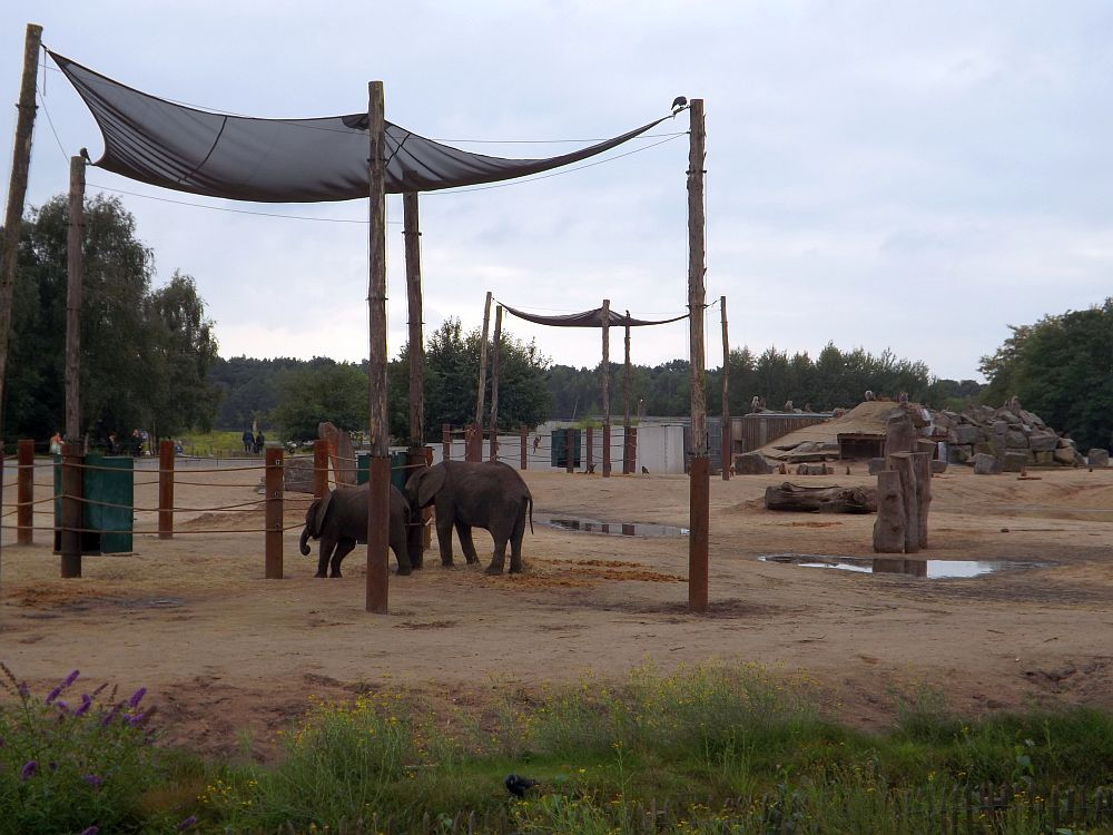 Elefanten- und Paviananlage(Safaripark Beekse Bergen)