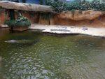 Krokodilanlage (Safaripark Beekse Bergen)
