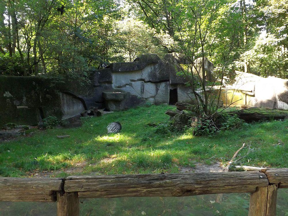 Stachelschweinanlage (Ouwehands Dierenpark)