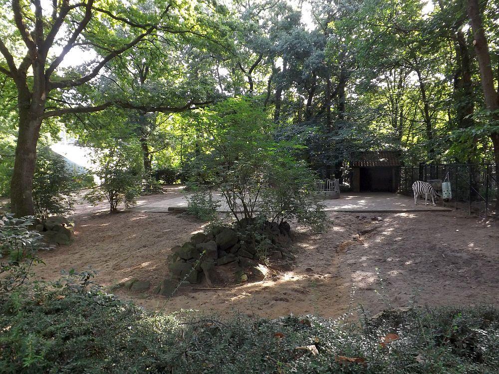 Zebraanlage (Ouwehands Dierenpark)