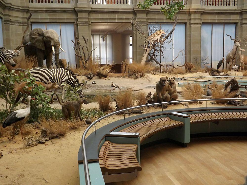 Zoologisches Forschungsmuseum Alexander Koenig