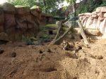 Erdmännchenanlage (Zoo Antwerpen)