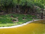 Humboldtpinguinanlage (Tierpark Berlin)