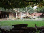 Kamelanlage (Zoo Amersfoort)