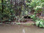 Luchsanlage (Bayerwald-Tierpark Lohberg)