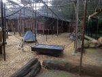 Schimpansenanlage (Zoo Amersfoort)