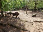 Wisentanlage (Tierpark Eberswalde)