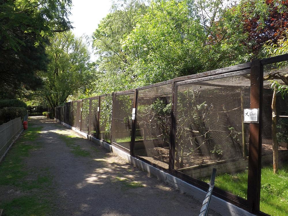 vogelpark heppenheim der beutelwolf blog. Black Bedroom Furniture Sets. Home Design Ideas