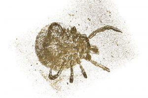 Dreidimensionale Darstellung der rund 100 Millionen Jahre alten Bernsteinzecke Amblyomma birmitum anhand der MikroCT-Aufnahmen.(Ruthensteiner, SNSB-ZSM)