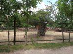 Streichelanlage (Zoopark Zajezd)
