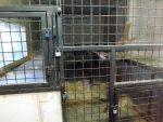 Innenanlage für Schimpansen (Zoo Dvorec)