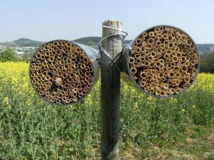Die verwendeten Nisthilfen bestehen aus Bündeln kurzer Schilfhalme, in denen die Insekten ihre Eier ablegen können (Foto: Verena Rieding)