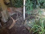 Außenanlage Ameisenigel (Zoo Planckendael)