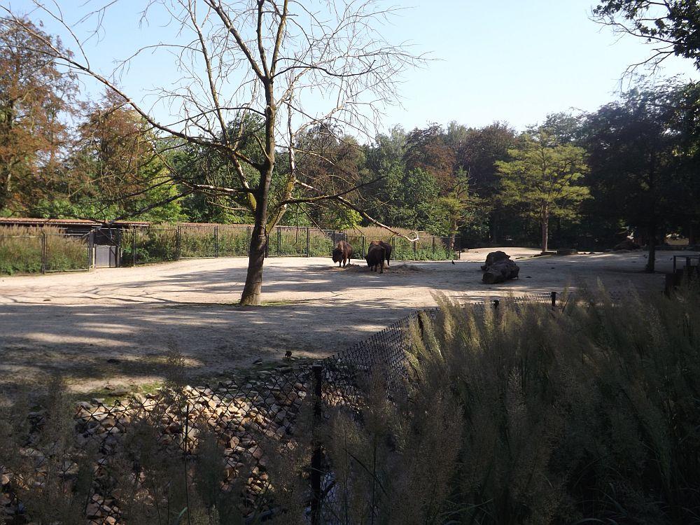 Bisonanlage (Zoo Planckendael)
