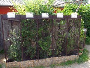 Volieren für Chamäleons (Zoopark Zajezd)