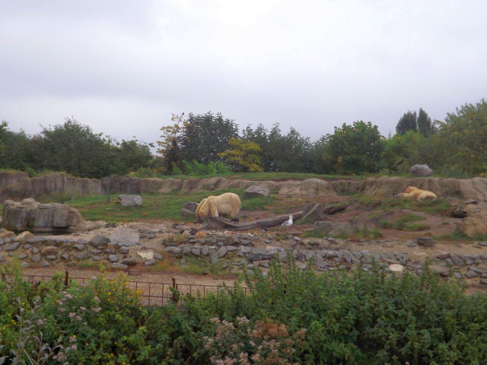 Eisbäranlage (Zoo Rotterdam)