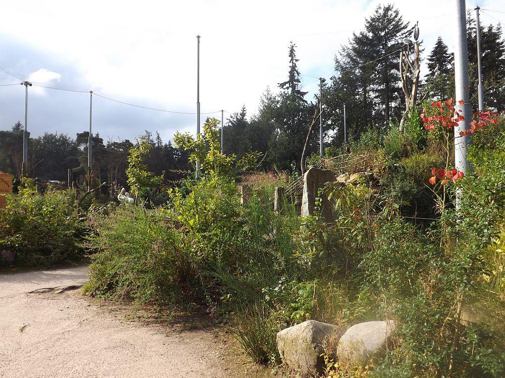 Begehbare Voliere mit Störchen und Geiern (Zoo Amersfoort)