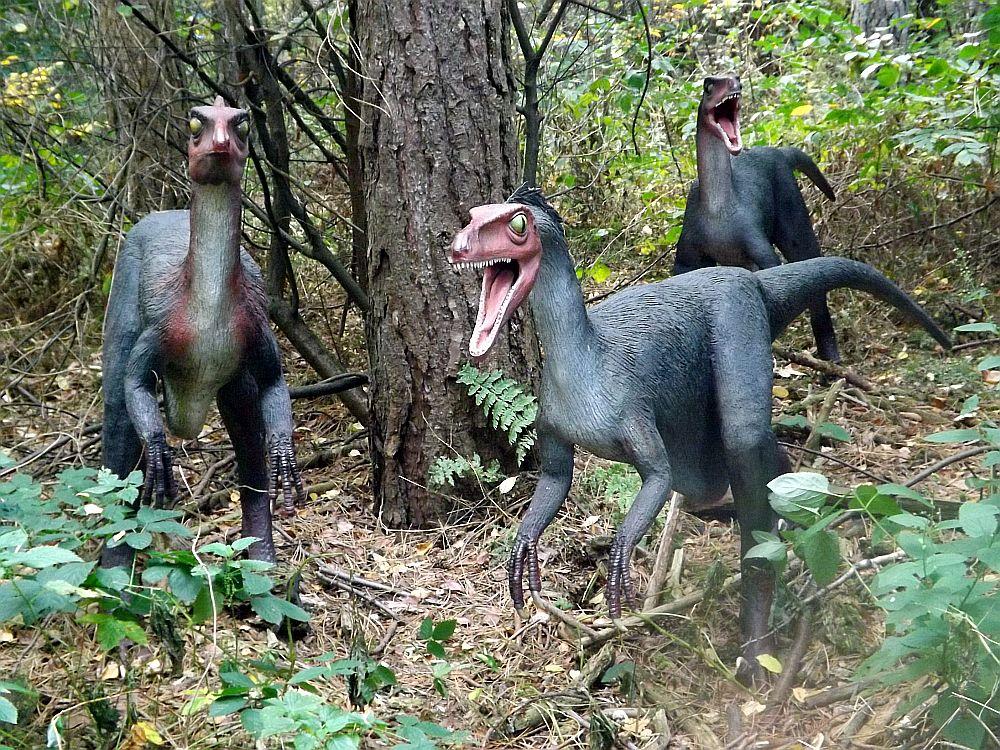 Troodont (Zoo Amersfoort)