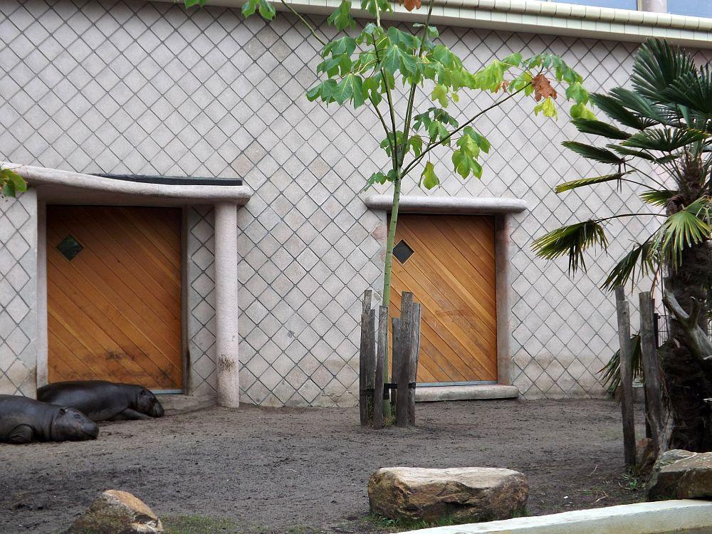 Zwergflusspferdanlage (Zoo Rotterdam)