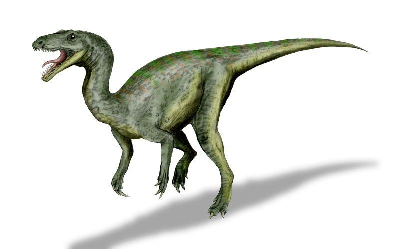 Gojirasaurus quayi (© N. Tamura)