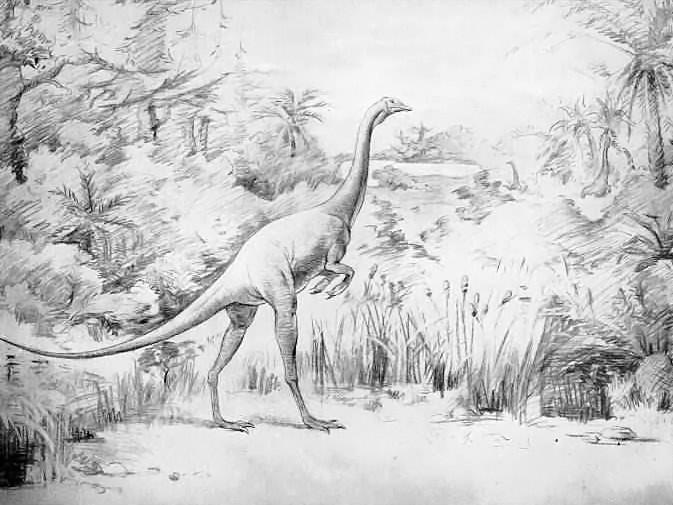 Struthiomimus (Irwin S. Christman)