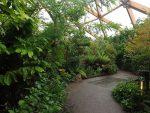 Amazonica (Zoo Rotterdam)