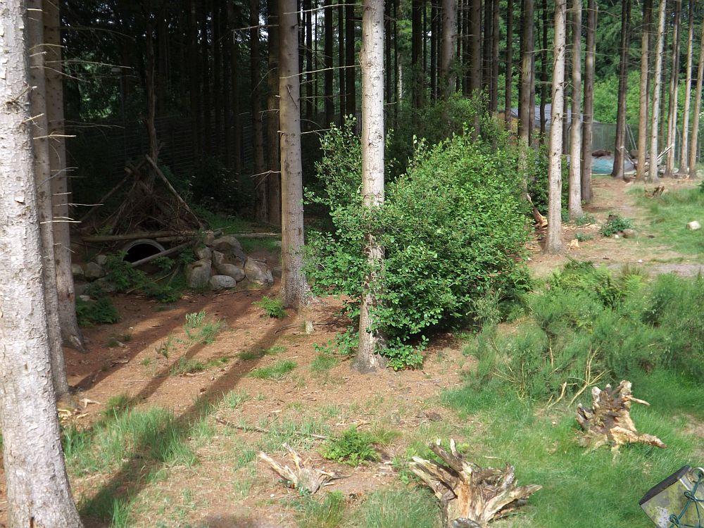 Bärenwald (Zoo in der Wingst)