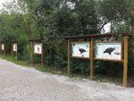 Greifvögel (Wildpark Poing)