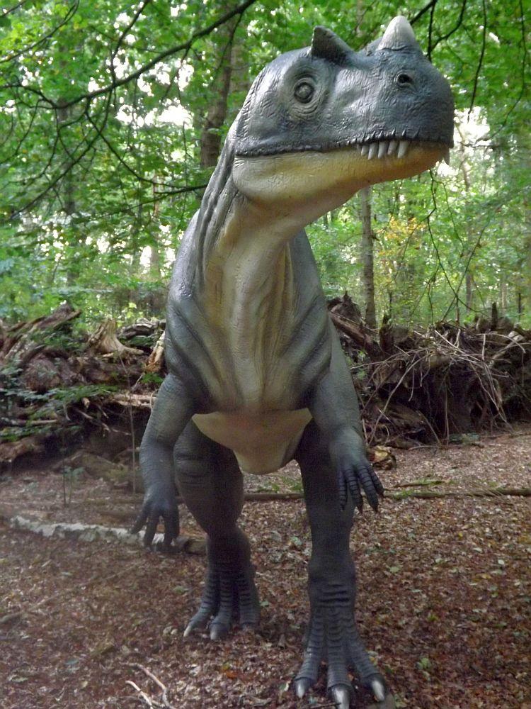 Ceratosaurus (Zoo Amersfoort)
